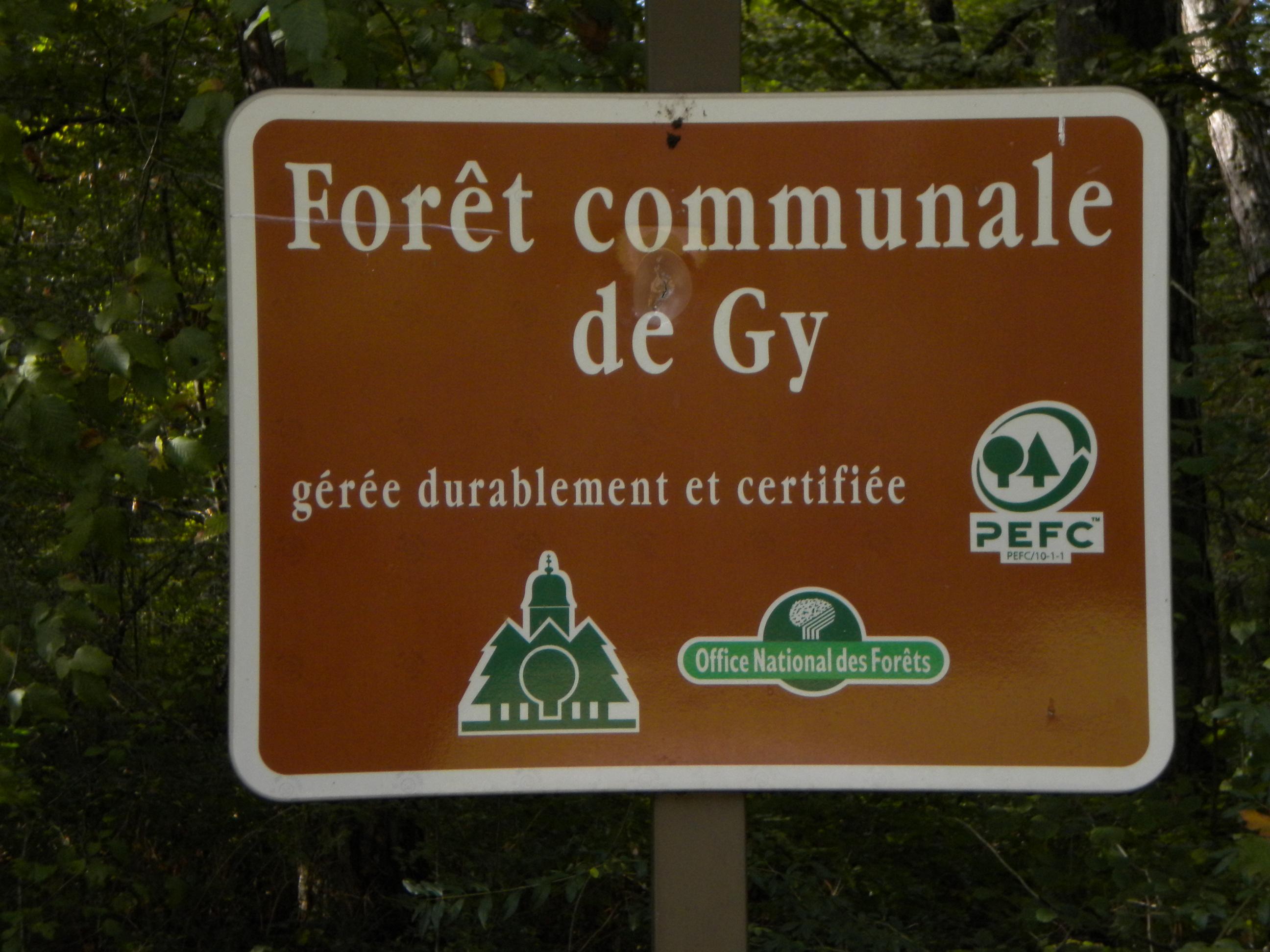 foret-de-gy-021